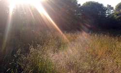 sun-grass
